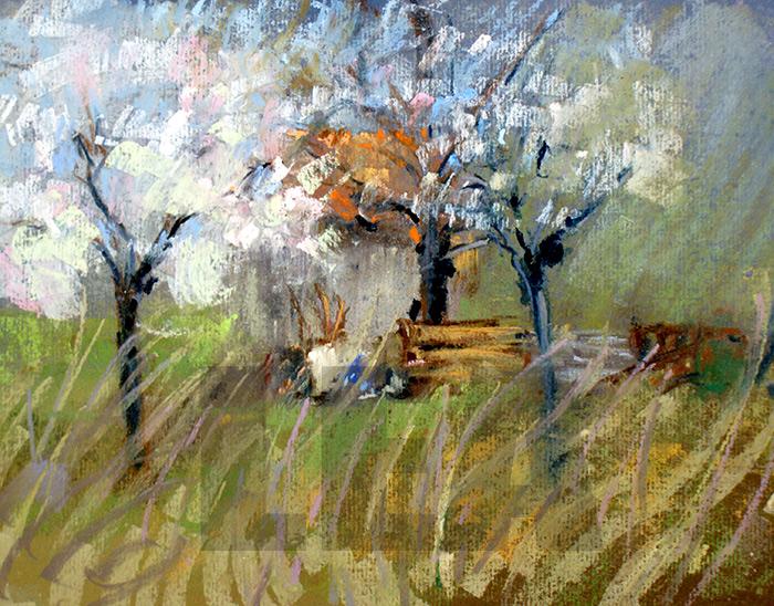 Cerisiers en Fleurs 37 x 45 cm